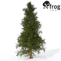 XfrogPlants Western Red Cedar