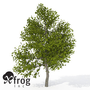 3d xfrogplants italian maple tree model