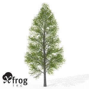 3d xfrogplants black alder tree model