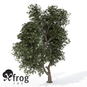 3ds xfrogplants hornbeam tree plant