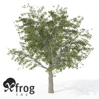 xfrogplants european hackberry tree 3d 3ds