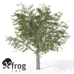 xfrogplants european hackberry tree 3d 3ds