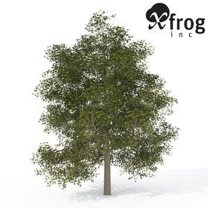 xfrogplants common ash tree 3d model