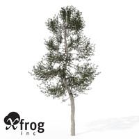 XfrogPlants Austrian Black Pine EU