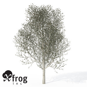 3d model xfrogplants white poplar tree