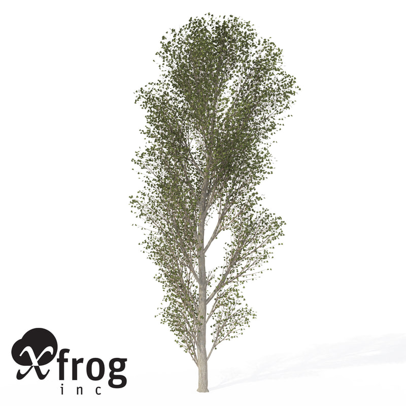 xfrogplants black poplar tree 3ds