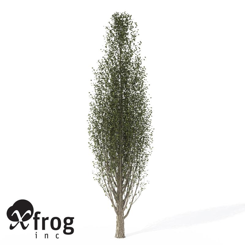 maya xfrogplants lombardy poplar tree