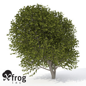 3d model xfrogplants cherry laurel tree
