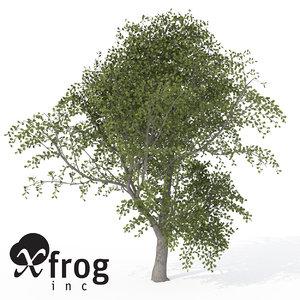 xfrogplants durmast oak tree 3d model