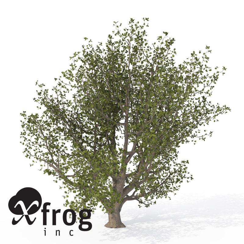 3ds xfrogplants english oak tree