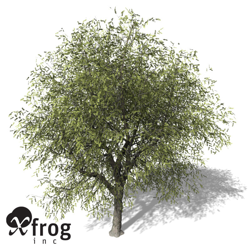 3d xfrogplants white willow tree