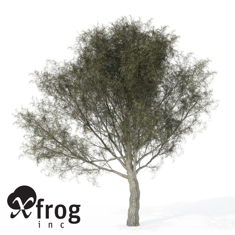 crack willow tree planted 3d model