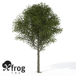 xfrogplants broad-leaved linden tree 3d model