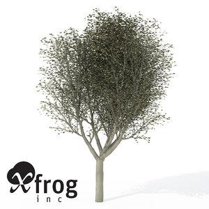 3d xfrogplants silver linden tree model