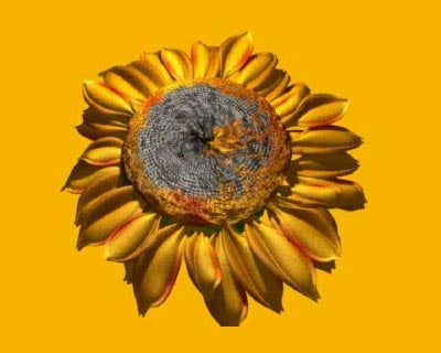 flower sun sunflower 3d model