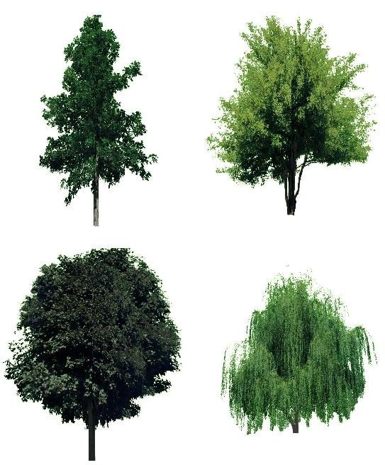 maya 22 trees