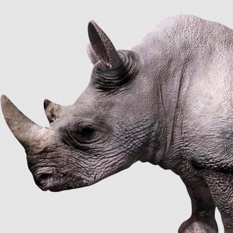 rhinoceros ma