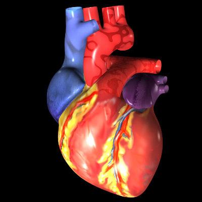 3ds max human heart exterior