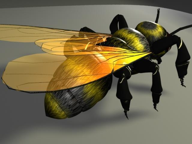 bee bumble ma