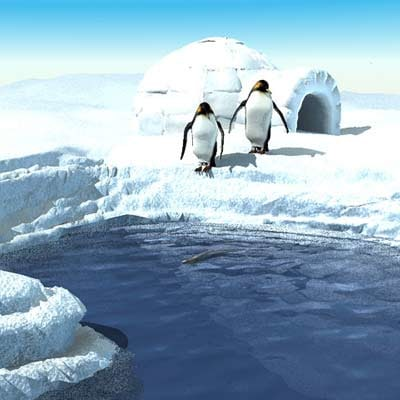 maya environment penguins igloo arctic