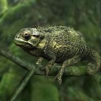 obj chameleon lizard