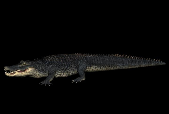 alligator crocodile 3d model