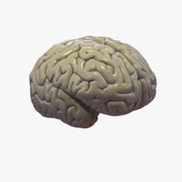 brain cerebrum 3d model