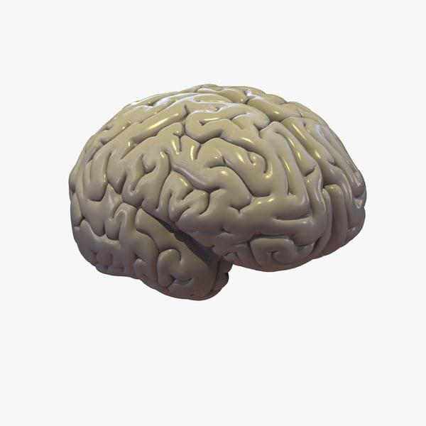 brain cerebrum 3d model