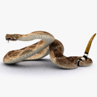 snake rattlesnake 3d model