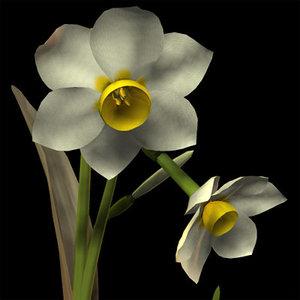 3d model daffodil