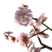 japanese apricot pink ume 3ds