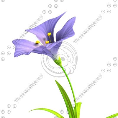 purple flower ma