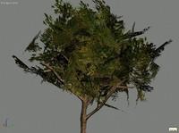 tree1.max
