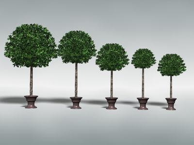 max decorative tree