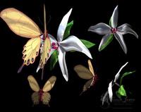 Orchid Final.obj