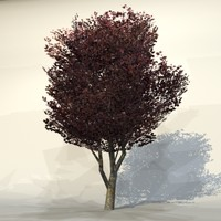 Autumn_tree_red4.zip
