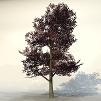 Autumn_tree_red1.zip