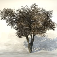 Winter_tree7.zip