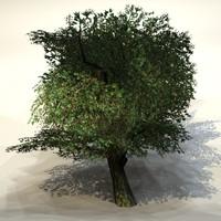 Summer_tree3.zip