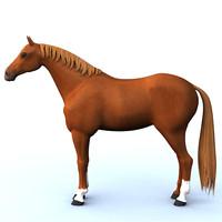 maya riding horse