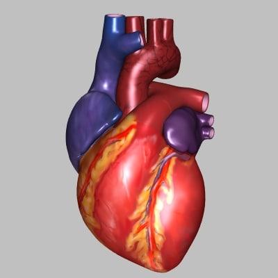Human Heart Exterior (3DS)
