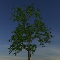 tree.lwo