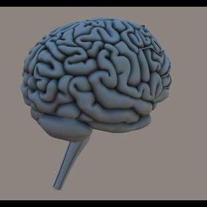 3d human brain poser