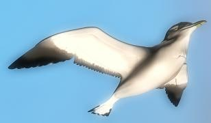 3ds max seagull flying