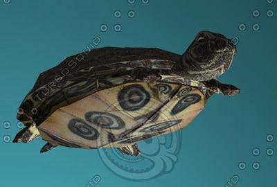 turtle x