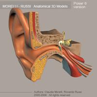 ear poser6 3d model