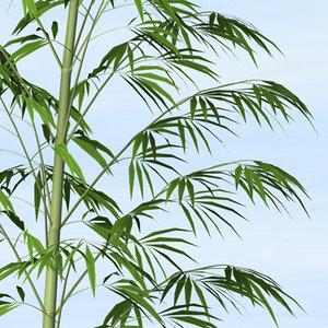 bamboo plants 3d x