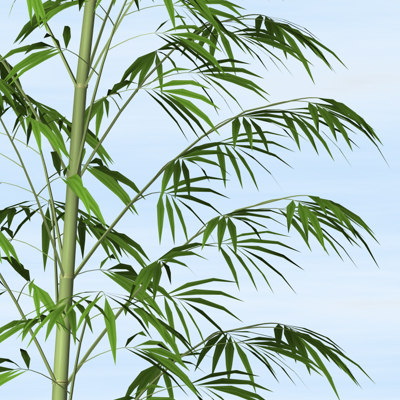 bamboo plants 3d x