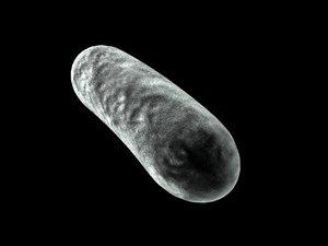 maya microscopic bacteria cell