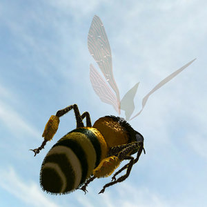 honey bee lightwave 3d model